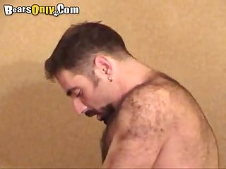 Hairy daddies enjoys doggy style pummeling